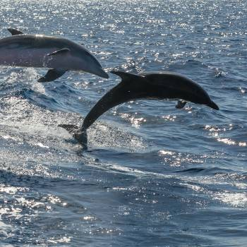 Excite - Dolphin Tour in the morning