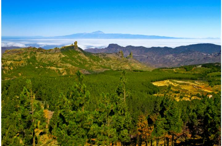 Excursion Gran Canaria Highlights